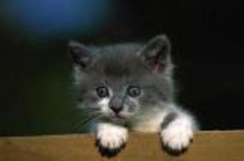 Article : Vol à cri de chat !