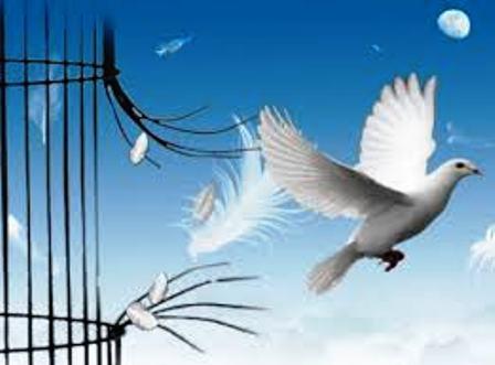Liberté selon les oiseaux